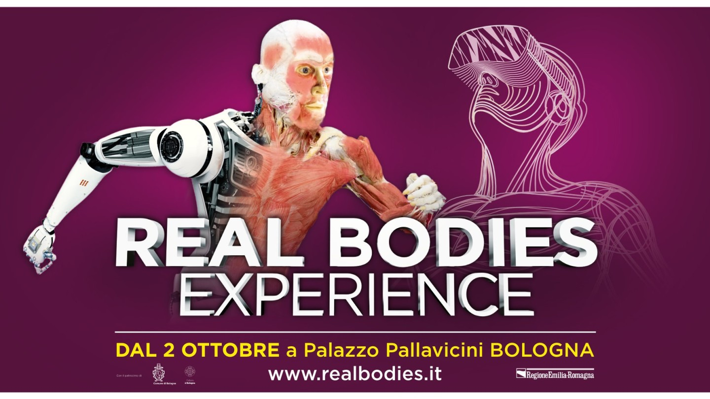 Real Bodies Experience